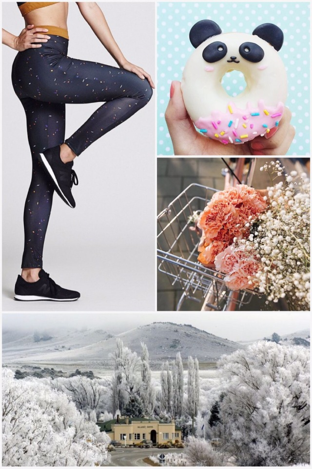 Fab Friday - ethical leggings, panda donut, carnations & gypsophila, Otago New Zealand heavy frost
